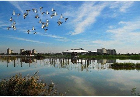 曹妃甸湿地公园地处黄金宝地,渤海明珠曹妃甸区,占地3.16万亩.