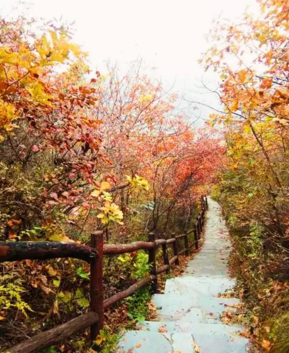 h;金祖山风景区